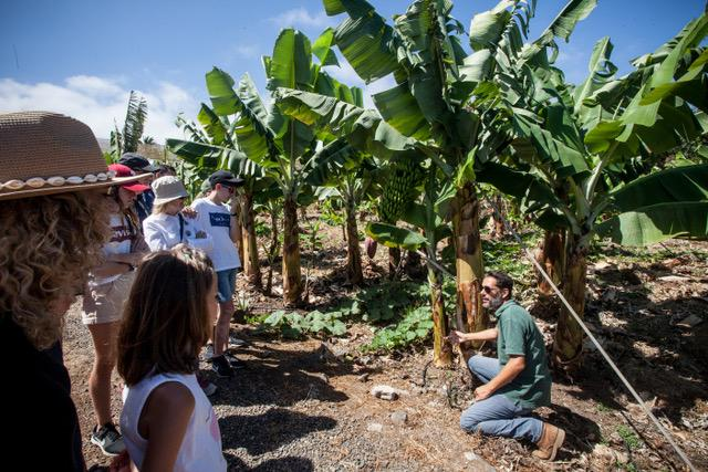 Banana Farm Tour